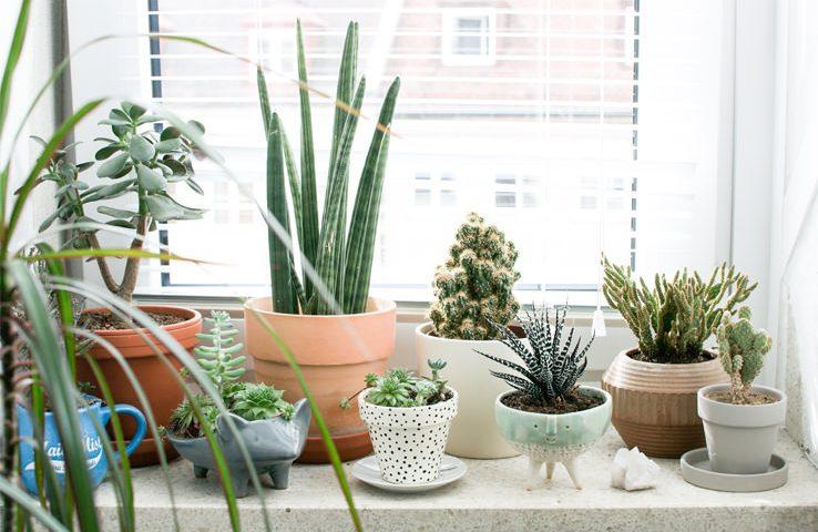 Ja 9 arsyet pse duhet të mbani lule në shtëpi.