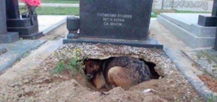 Qenushi qëndronte mbi varrin e pronarit pa lëvizur, më pas zbulimi lë pa fjalë