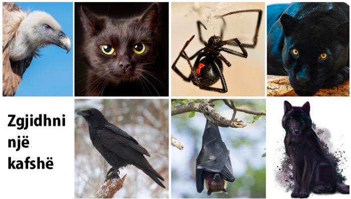 Zgjidh një kafshë ne foto dhe zbulo anën tënde të errët të personalitetit