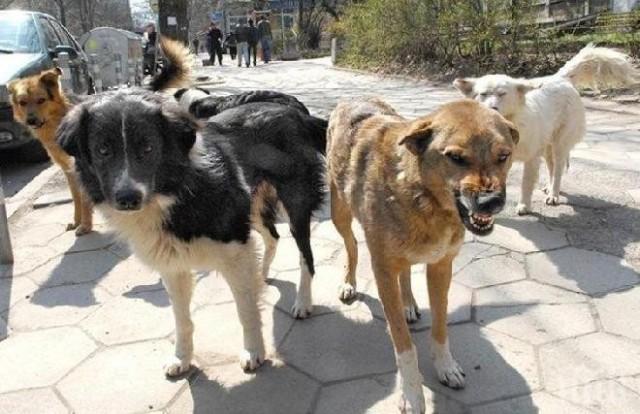 Kush eshte qyteti që jep 1000 deri 3000 euro dëmshpërblim nëse ju kafshon qeni endacak