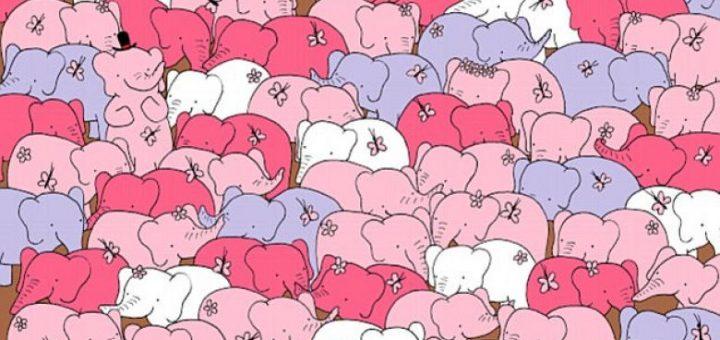 A mund ta gjeni zemrën e fshehur mes elefantëve? Ai qe e gjen eshte nje gjeni (Foto)