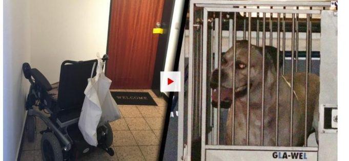 Tragjedi në familjen shqiptare, qeni i shtëpisë vret nënë e bir