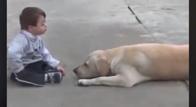 Shikoni çfarë bën qeni për vogëlushin me sindromin 'Down'