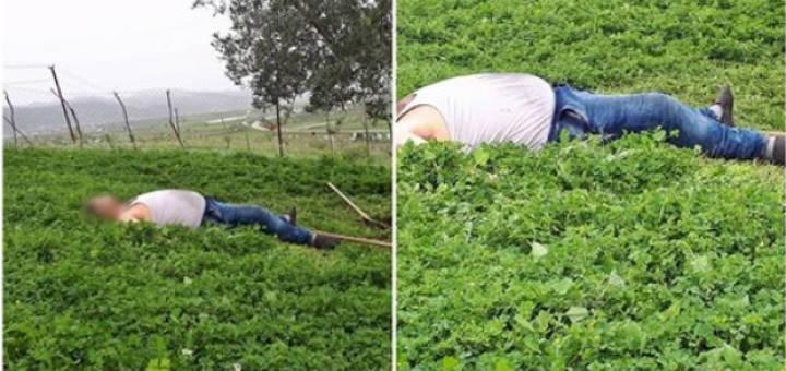 Mori shqiptarin që t'i mblidhte ullinjtë, pronari shtanget kur shkon ta kontrollojë